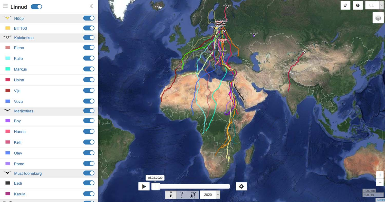 Saatjatega varustatud lindude rändeteekonnad on kõigile nähtavad avalikul rändekaardil (https://birdmap.5dvision.ee)