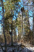 Pesapuu ja kaamerapuu