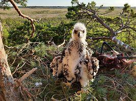 Kaljukotka poeg 38 päeva vanusena