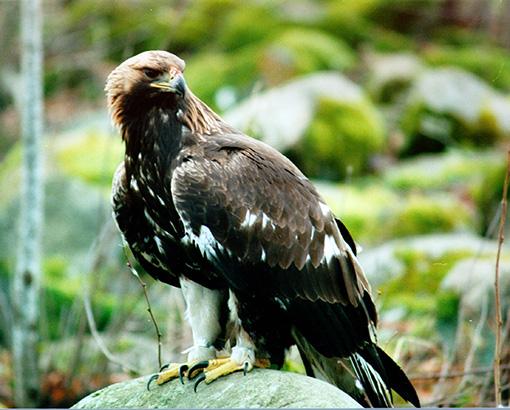Может ли орел увидеть мышь на расстоянии 3 км? – Vunderkind.Info | 410x510